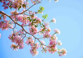 Primavera a Marconi
